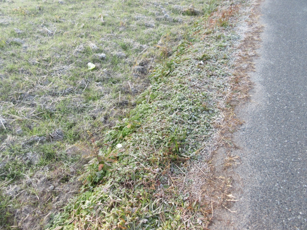 寒い朝、霜が降りていました。
